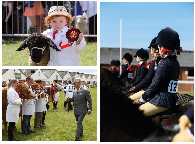 Great Yorkshire Show competitors