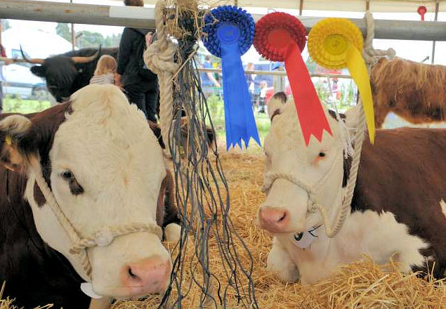 things to do in harrogate ripley show