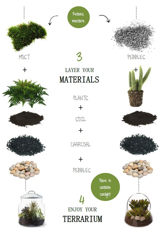 indoor gardens how to terrarium