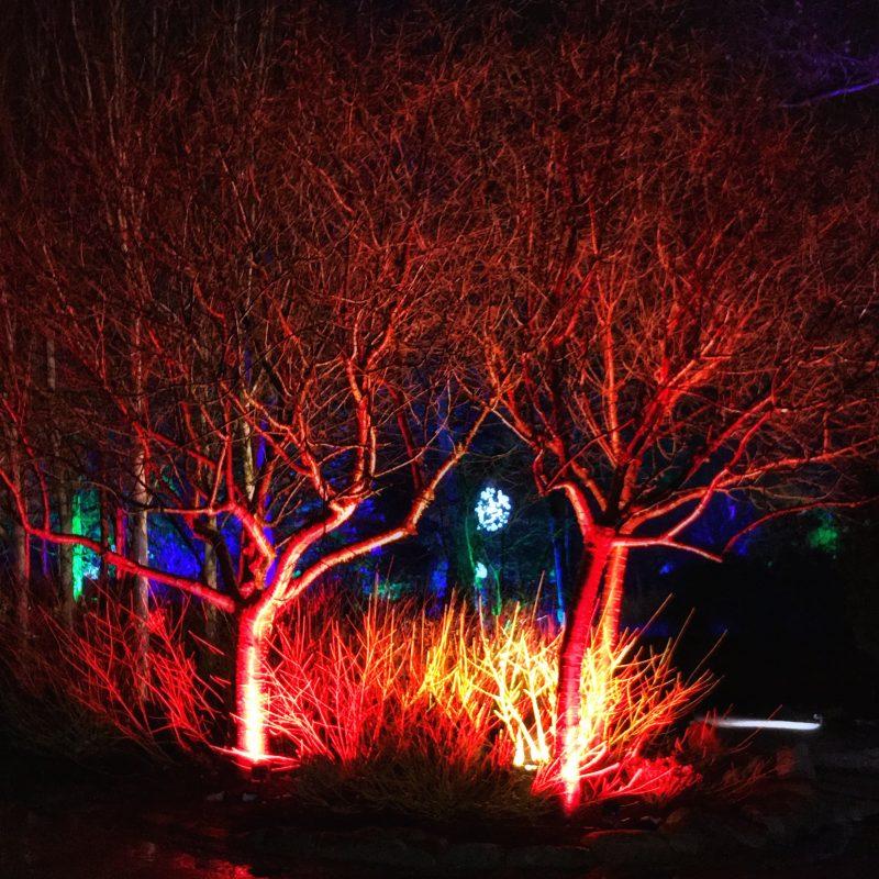 RHS Harlow Carr Garden GLOW harrogate