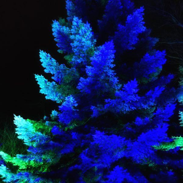 RHS Harlow Carr Garden GLOW light show
