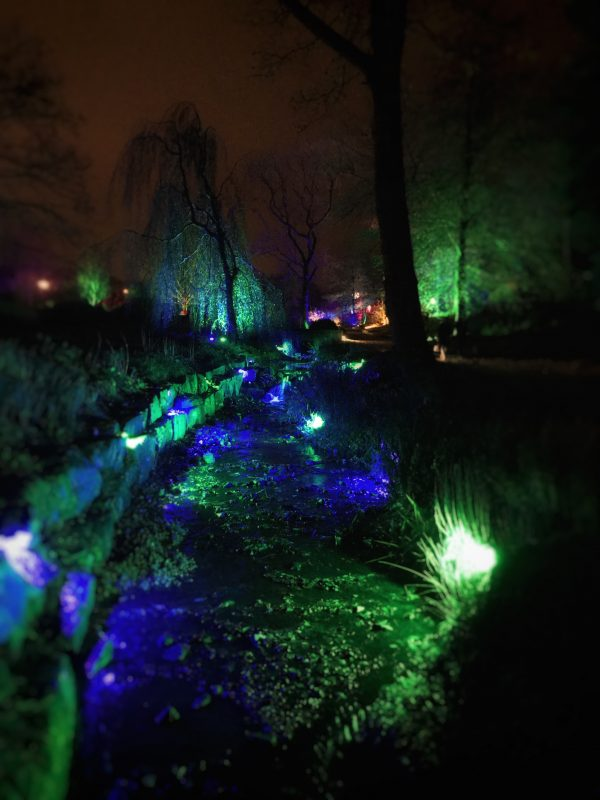 Glow Illusions At Rhs Garden Harlow Carr