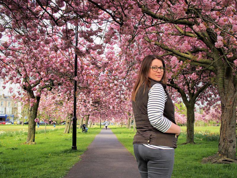 the harrogate girl harrogate blossom the stray