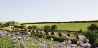The Harrogate Girl Glamping Yorkshire Humble Bee Farm