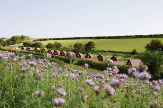 The Harrogate Girl Glamping Yorkshire Humble Bee Farm